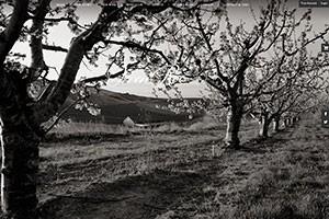Vin65 Portfolio - Owen Roe